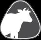 Dairy / Cow / Bovine