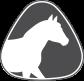 Equine / Horse
