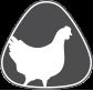Poultry / Chicken / Turkey