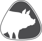 Swine / Pig